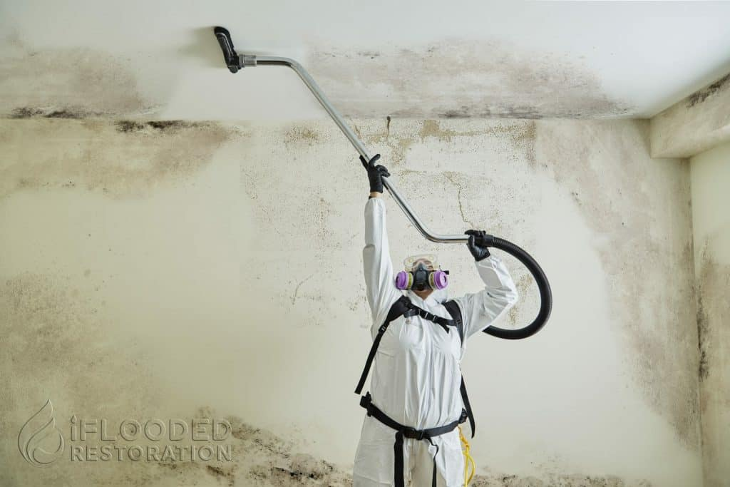 mold remediation queens