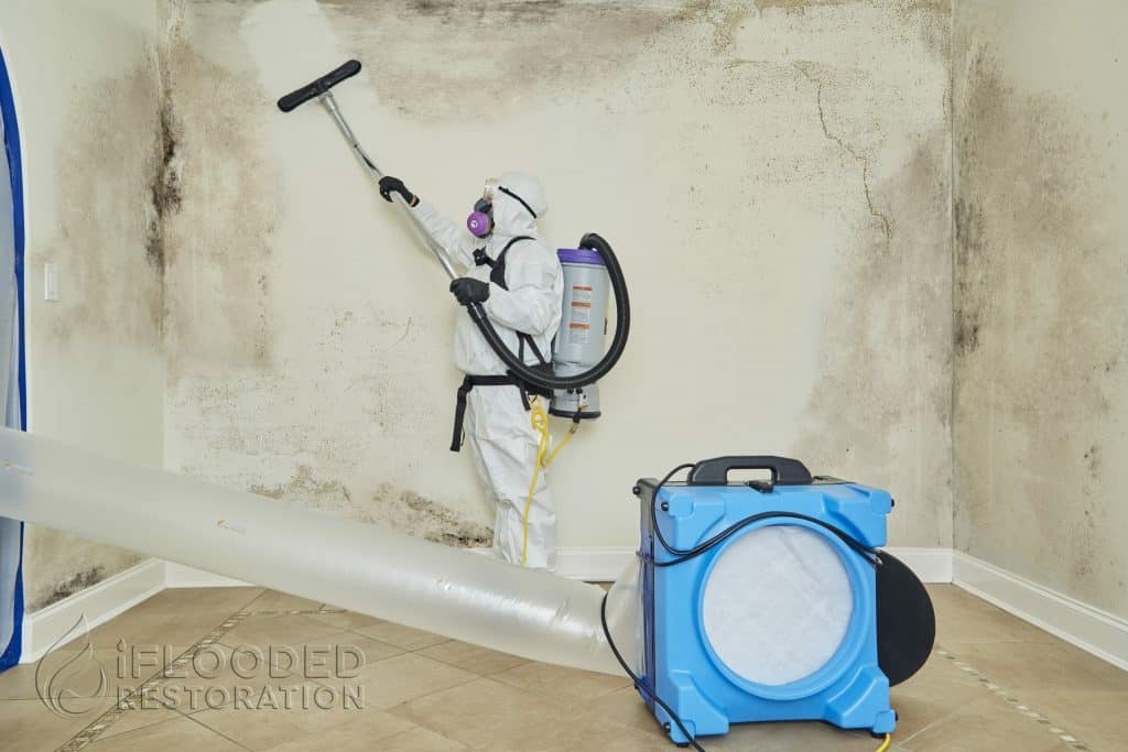Residential Mold Removal
