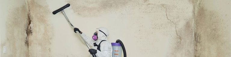 long island mold removal