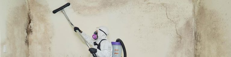 queens mold removal